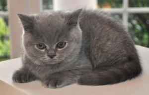 cat-1248019_1920